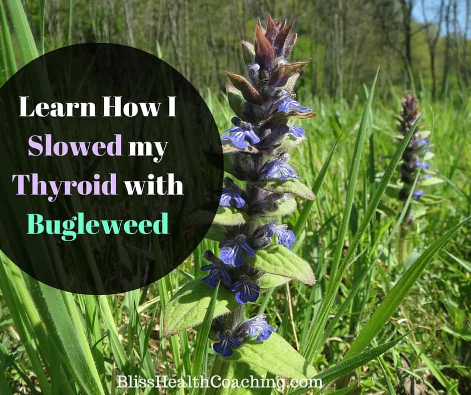 How to Slow Down Hyperthyroidism with Bugleweed