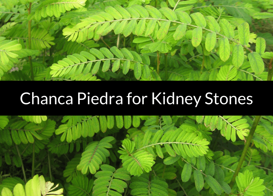 Use Chanca Piedra for Kidney Stones